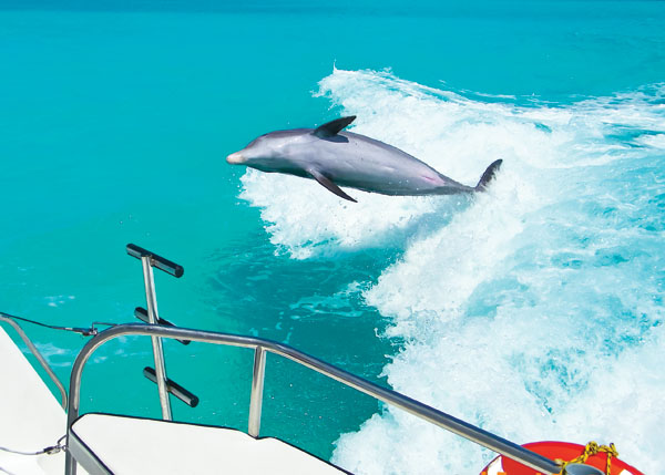 A photograph of wild and free dolphin Jojo, Turks and Caicos Islands, British West Indies
