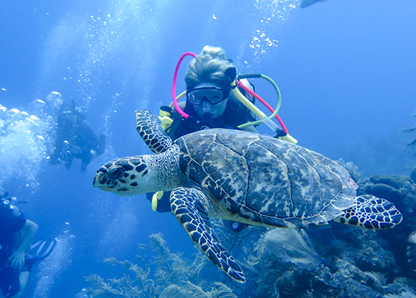 A photograph of a hawksbill turtle on Grand Turk in the Turks and Caicos Islands.