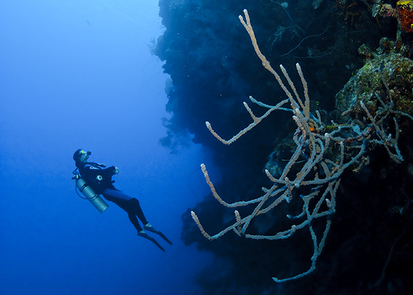 A photograph of a Diver at Northwest Point in the Turks and Caicos Islands.